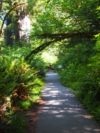 Trail leading to Big Tree